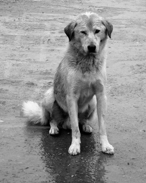 Rainy_Dog_by_dijitali